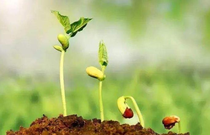植物单细胞